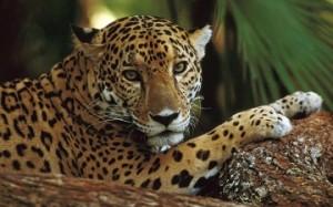 jaguar-1280x800