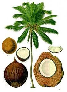 CoconutDiagram